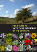 Field Guide to Wildflowers of the Sharhabil Bin Hassneh EcoPark, Jordan